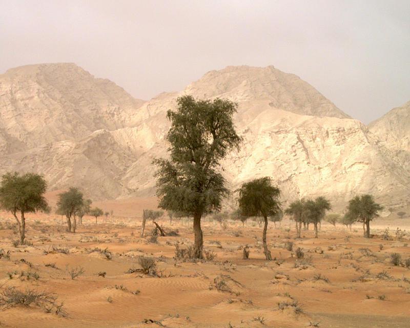 Emiratos Arabes_3_Paisaje Mleiha_Carmen del Cerro